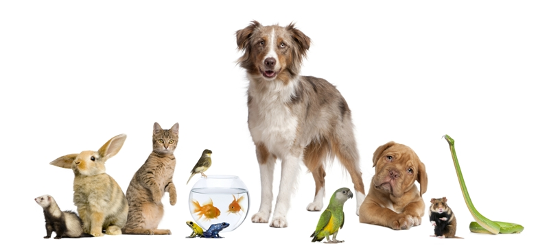 Group of Pets_lr