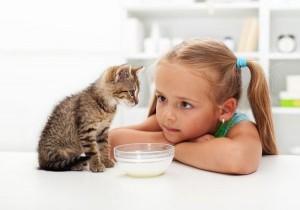pisica-care-bea-lapte